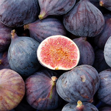 The Figs season has began